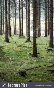 Nature Landscapes Portrait Of Forest Background