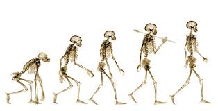 The Science Of Attractiveness Darwin S Theory Of Evolution In Today S Society Hall High Scientific Journal
