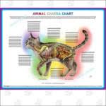 Animal Chakra Chart Chakra Healing Marla Steele Pet Psychic