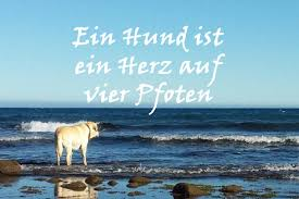 Weisheiten Sprichwörter Zitate über Hunde Nachdenkliches Und
