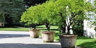 large extra large garden plant pots