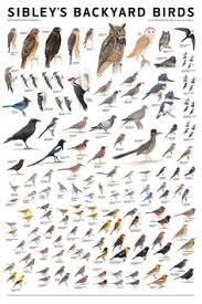 Free Printable Bird Watch Tally Sheet  Free Printable Bird And FreeBackyard Bird Watch