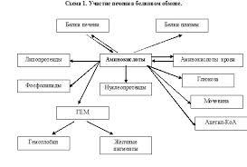 Реферат Биохимия печени метаболизм аминокислот в печени Метаболизм аминокислот в печени