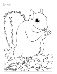 Squirrel Coloring Sheet Squirrel Coloring Pages Page For Adults Fall