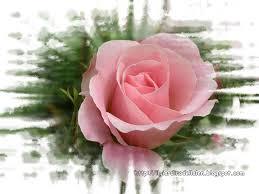 Risultati immagini per immagini piccole di fiori belli