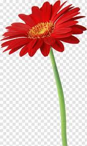 Desktop Wallpaper IPhone Flower Samsung ...
