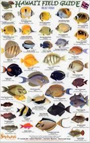 Oahu Fish Chart Hawaii Reef Fish Guide 2 Field Guide Rainforest