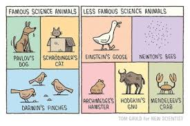 Famous Animals Of Science Broadsheet Ie