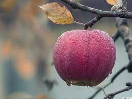 Juice red apple HD wallpaper download