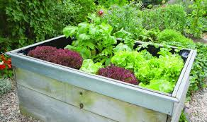 the advantages of gardening with raised beds