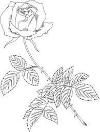 Disegno Di Rosa Royal Highness Da Colorare Disegni Da Colorare E