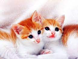 Cute Cats | HD Wallpapers