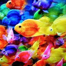 moving fish wallpaper for phones. Plain Moving With Moving Fish Wallpaper For Phones F