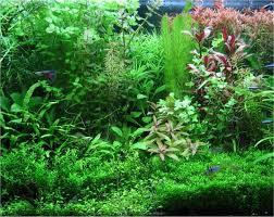 Risultati immagini per piante