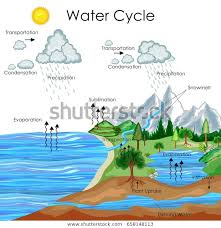 Water Resources Chart Education Chart Biology Water Cycle Diagram Stock Vector