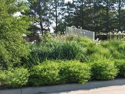 summer prairie garden
