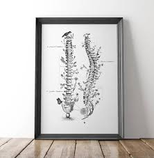 Chiropractic Wall Charts Chiropractic Christmas Gift Spine Anatomy Diagram Spine And Flowers Art Spine Gift Neuro Nurse Gift Neuroscience Gifts Spine Surgeon Gifts