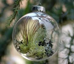 77 Best Air Plants Images On Pinterest  Gardening Indoor Plants Christmas Gift Plants
