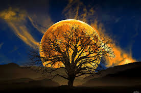 Image result for Beautiful image of the moon