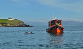 Image result for dingle ireland dolphin