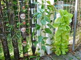 diy vertical herb and vegetable garden with mounted on the wire fence with diy recycled bottle plastic planter box for small garden spaces ideas