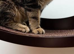 art of paws cat window shelf curved