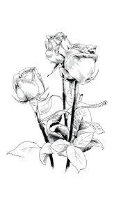 Flowers Rose Drawn Flowers Healthy