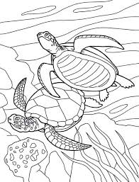 Small Picture Free Picture of Sea Turtle Mating Coloring Page Download Print
