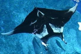 「那覇 水族館」の画像検索結果