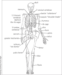 essay body systems work together fresh essays essay body descriptive essay tips descriptive essay writing tips ipp english