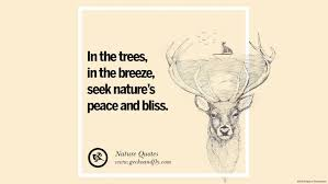 Beautiful Deer Quotes Best of 24 Beautiful Quotes About Saving Mother Nature And Earth