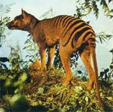 La tigre della Tasmania si è estinta per una scarsa diversità genetica