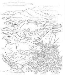Small Picture Desert Animals Coloring Pages Desert Animals Coloring Pages