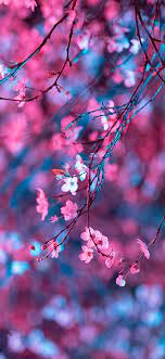 Cherry Blossom Wallpaper - NawPic