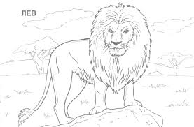 Realistic Animal Coloring Pages To Print At Getdrawingscom Free