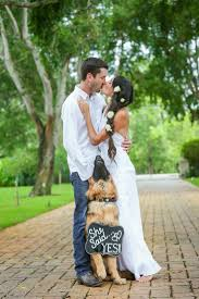 best 25 dog proposal ideas on pinterest puppy proposal, dog Wedding Greetings In German german shepherd, she said yes, engagement photo (how to get him to propose wedding greetings german