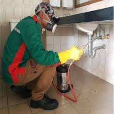 solution pest control termite control tikus Tips – Brantas Pesticindo