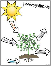 Photosynthesis Coloring Activity Plants Photosynthesis Coloring ...