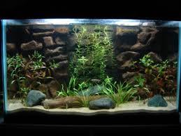 Aquarium Backgrounds How To Make A 3d Fish Aquarium Background Pethelpful