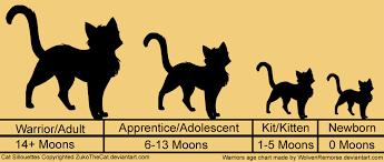 Cat Height Chart Kitten Size Chart Bedowntowndaytona Com