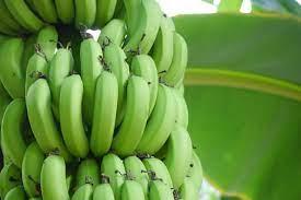バナナ 早口 言葉