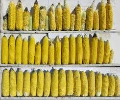 Understanding Sweet Corn Populations Seminis