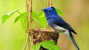 Beautiful Birds Images Hd Wallpaper ...