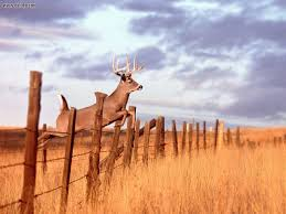 cool outdoor backgrounds. Deer Hunting Backgrounds - Wallpaper Cave Cool Outdoor
