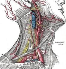 verspannungen im nacken schulterbereich
