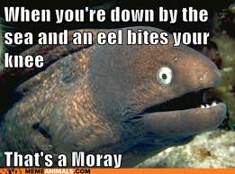 When down by the sea and an eel bites your knee... that's a moray ... via Relatably.com