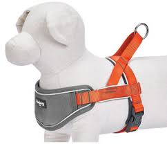 Best Dog Harness For Running 2019 Jog With Your Pup