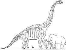 brachiosaurus size brachiosaurus wikipedia