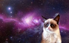 grumpy cat wallpaper nature vergapipe