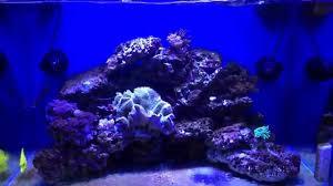 Acquario marino di vito verona crystal reef youtube